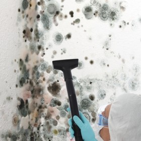 Mold Cleaning